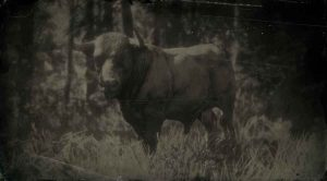 Red Dead Redemption 2 All Animal Locations (Zoologist & Skin